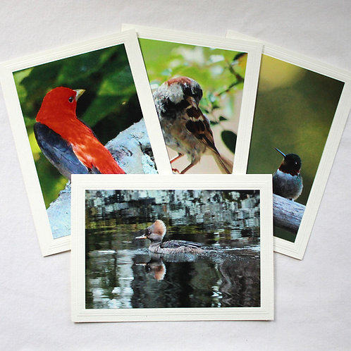 Priory Birds Card Collection