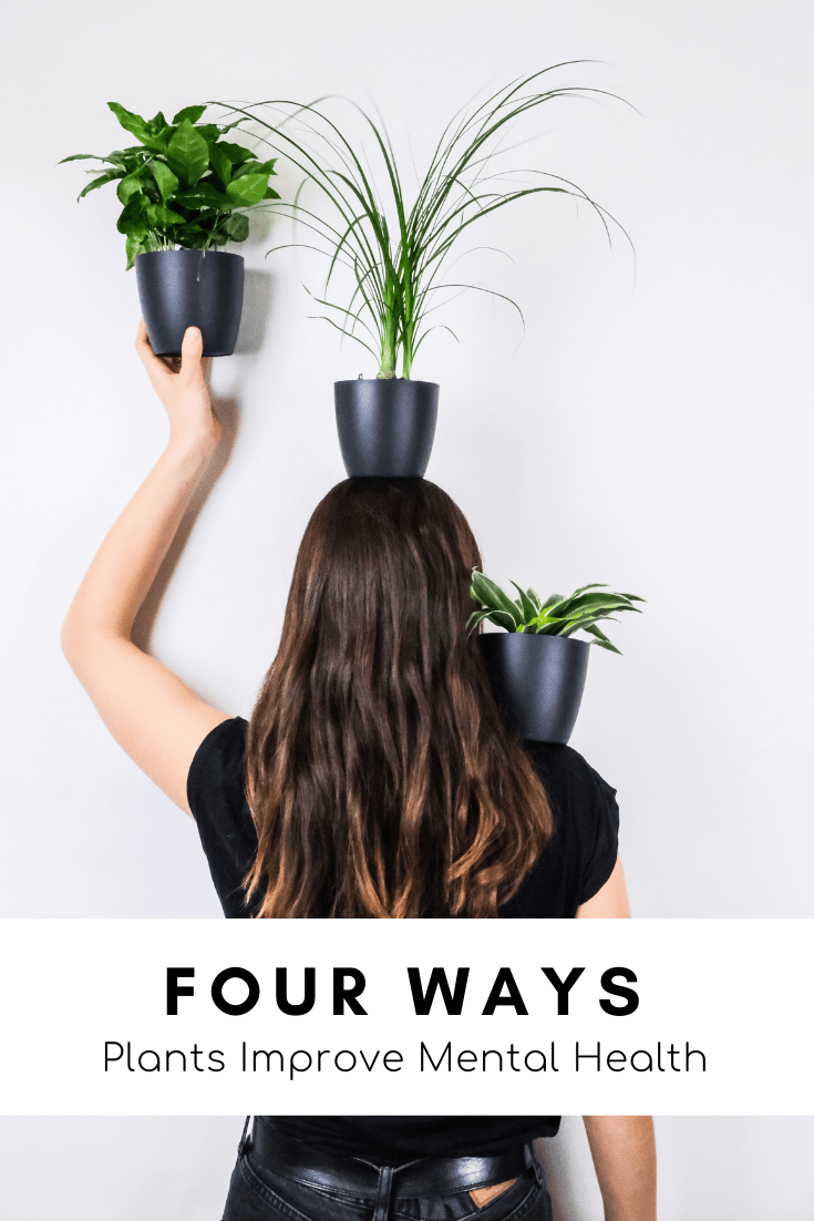 Four Ways Houseplants Improve Our Mental Health