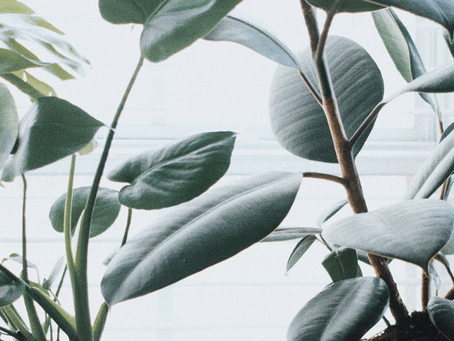 Step-By-Step Health Check for Your Houseplants