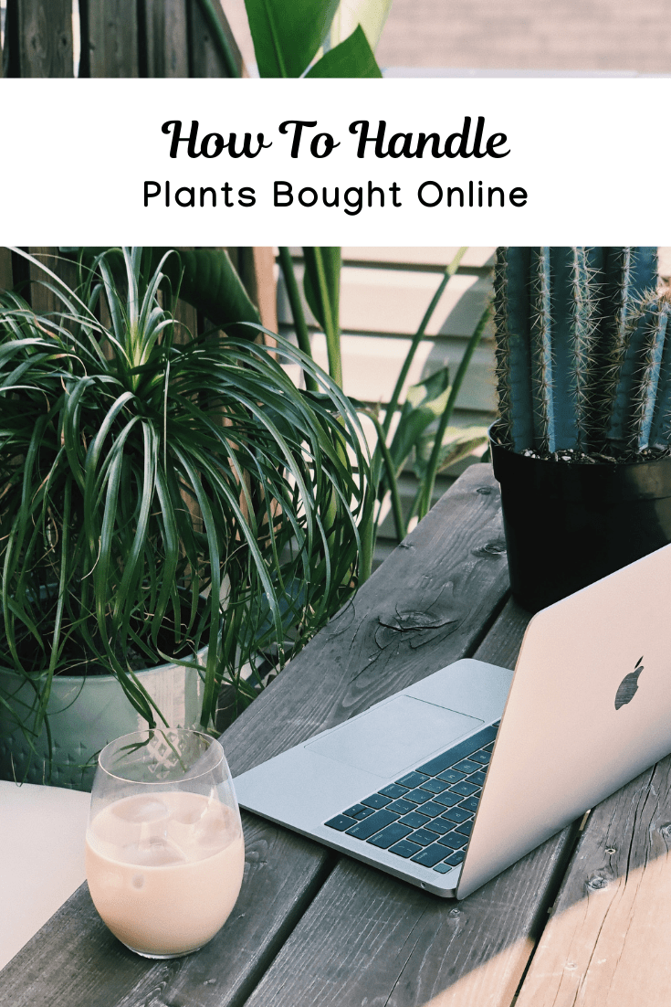 7 Things to Consider Before and After You Buy Plants Online