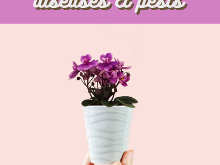Pests and Diseases that Affect African Violets
