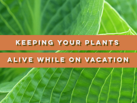 How to Keep Your Mini Plants Alive While on Vacation