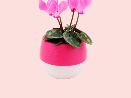 Self-Watering Pot Tutorial