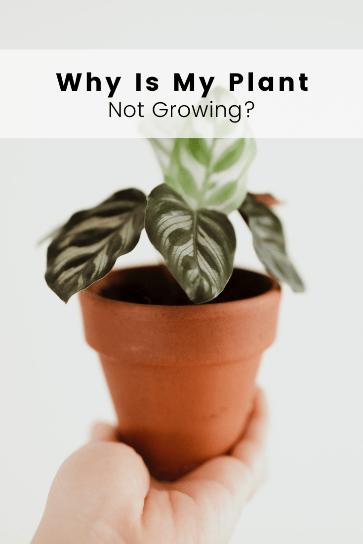 Why is My Plant Not Growing?