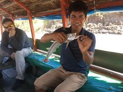 Payara fish