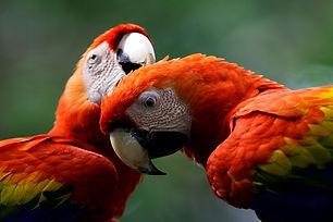 Macaw | Tour de 7 días y 6 noches en la Reserva Nacional Pacaya Samiria