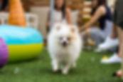 pet events