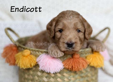 Endicott_Boy4.jpg