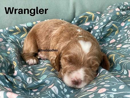 RosieWrangler.jpg