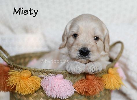 Misty_Girl2.jpg