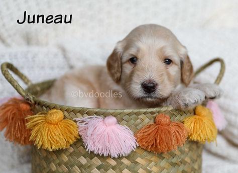 Juneau_Girl4.jpg