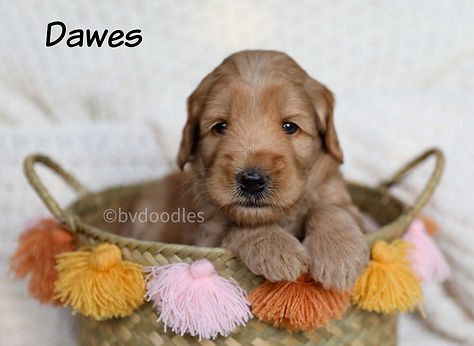 Dawes_Girl3.jpg