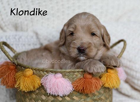 Klondike_Boy1.jpg