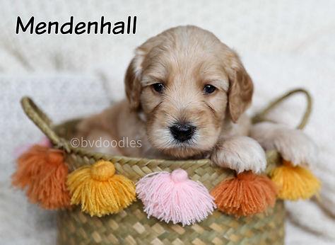 Mendenhall_Boy3.jpg