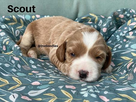 RosieScout.jpg