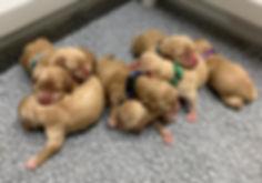 BindiPuppies.jpg