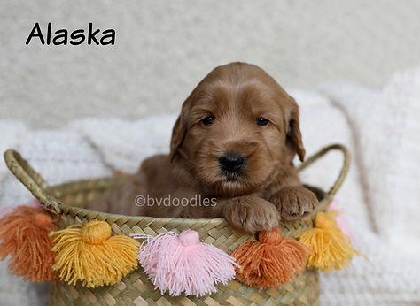 Alaska_Girl1.jpg