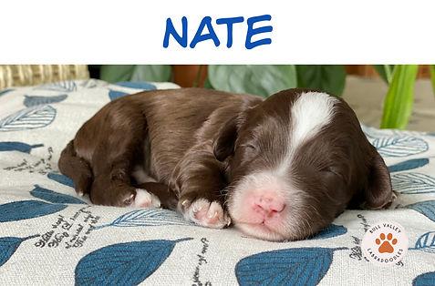 Mini_Nate.jpg