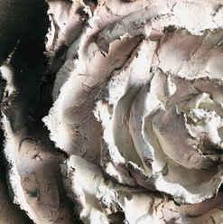 Dusky Rose Detail