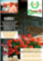katalog.framsida.jpg