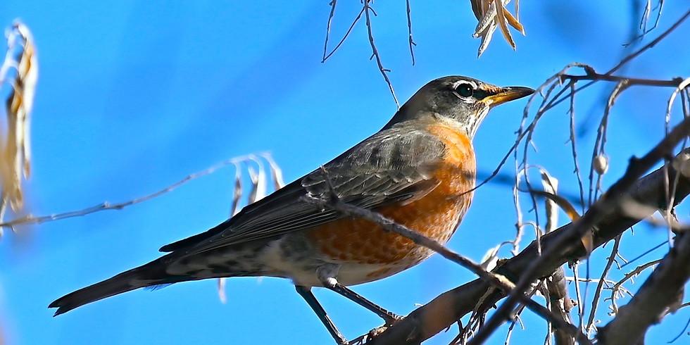 *Kids/Families*        The Bird is the Word: Family Birding Adventure