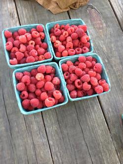 Raspberries August 2015