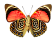 Butterfly-4.png
