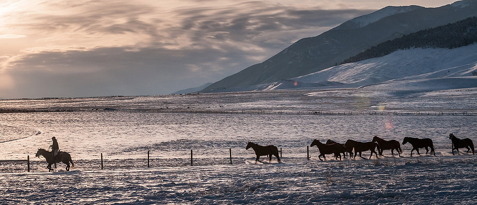 lcm_home_winter_horses_0.jpg