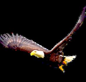Bald-Eagle-PNG-Image_edited_edited.png
