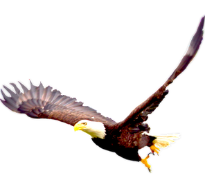 Bald-Eagle-PNG-Image_edited_edited.png