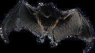 IMGBIN_bat-flight-animal-bird-mammal-png
