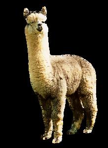 alpaca-silhouette-clip-art-19.png