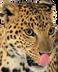 jaguar_PNG20734_edited.png