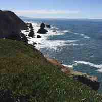 Bodega Head, CA   Photo by Martha Clark Scala