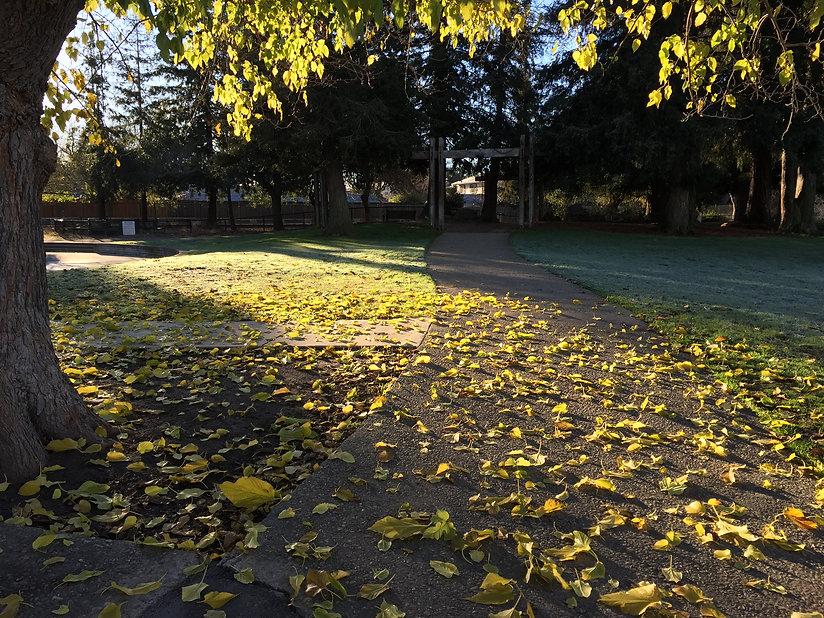 Hoover Park Foliage, Palo Alto, CA