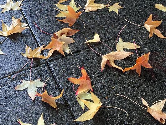 Autumn Leaves on Wet Sidewalk