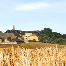 Brauerei mit Gerste 2019_Farbintensität_