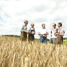 gerstenbauern.jpg
