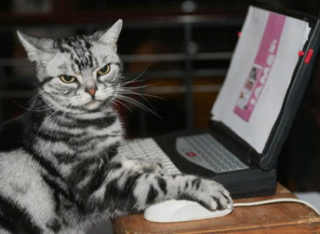 Study: Cat Videos Are Actually Good For You