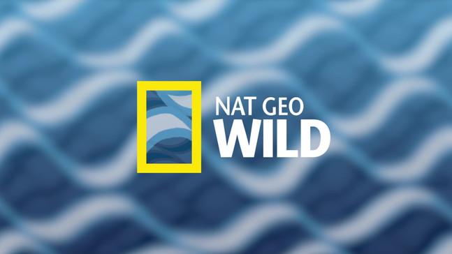 Nat Geo Wild Rebrand