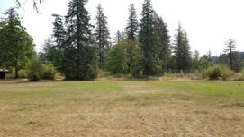 Softball Field & Firs Tent Camping