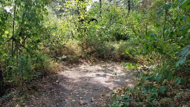 Trout Group Site- tent spot