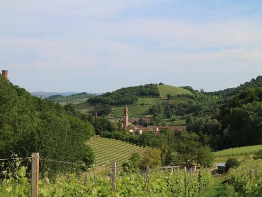 Piedmont (Langhe, Alba, Roero)