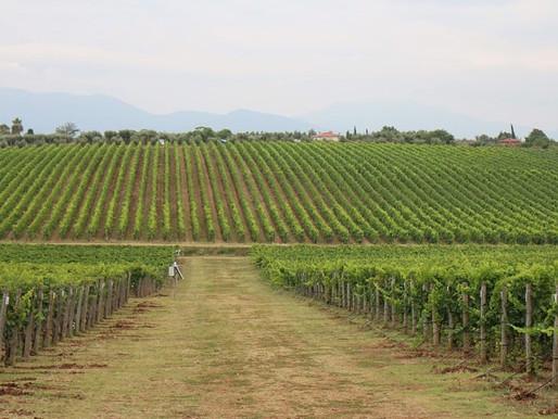Lazio (Lazio wines)