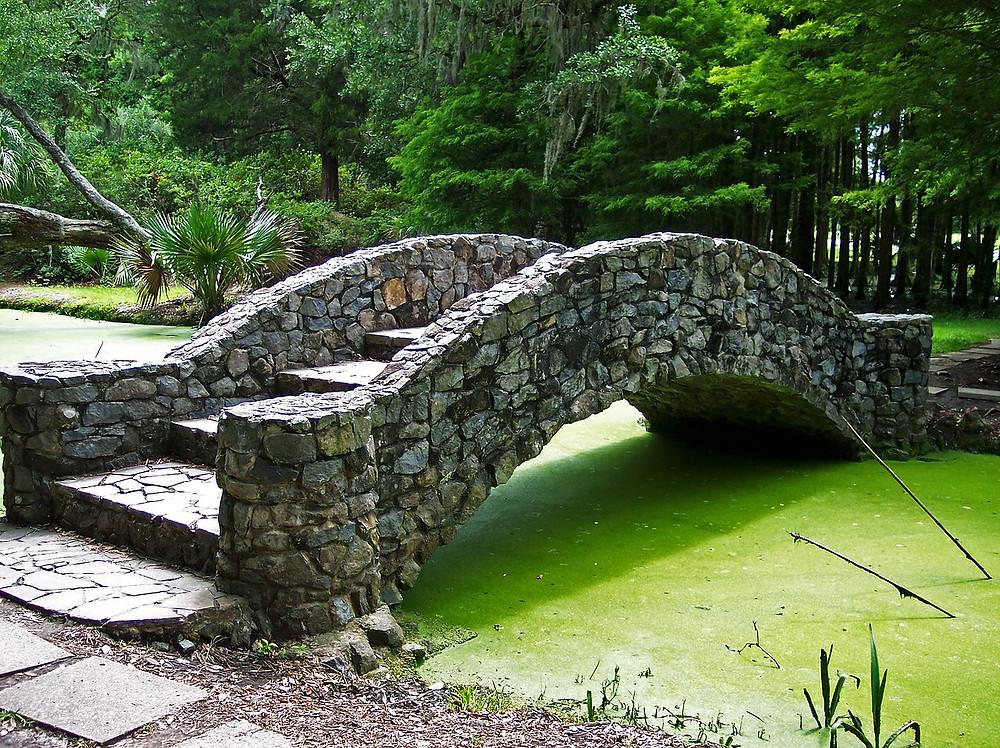 Green water Algae in your Garden Pond