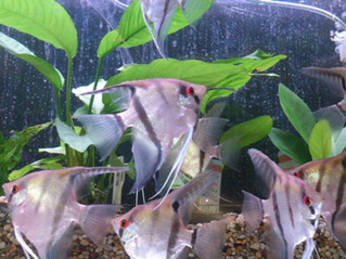 5 Top Tips for Feeding your Tropical Fish