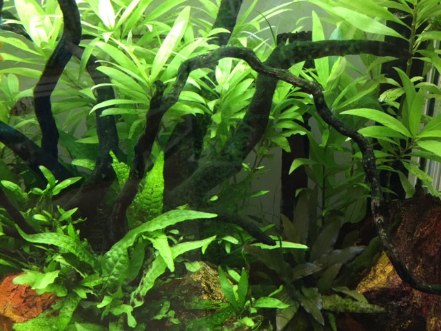 Algae in your Aquarium