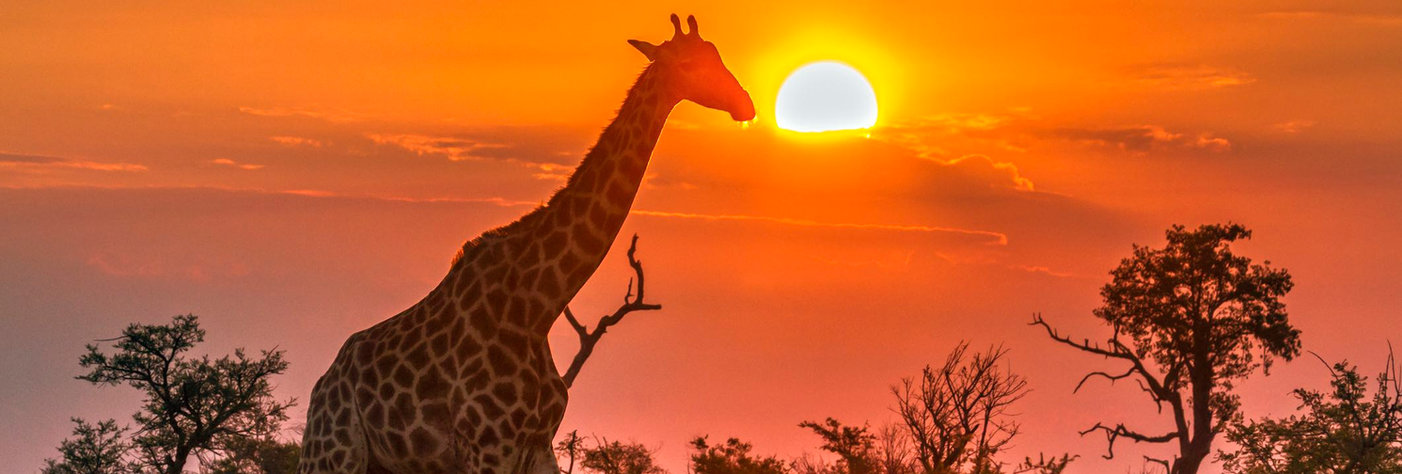 South Africa_Giraffe_lr.jpg