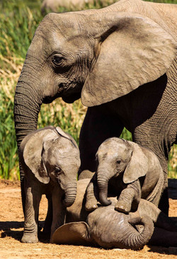 Elephant on Safari tour South Africa
