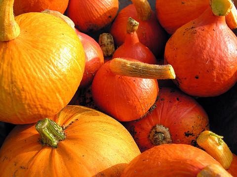Stay Balanced & Warm with a Sunny Pumpkin Soup